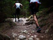 Equipos de 7 corredores podrán participar en la Carrera de los Árboles y Castillos